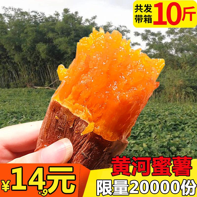【买5斤送5斤】红薯新鲜农家地瓜板栗沙地小番薯蜜薯共发带箱10斤11-30新券