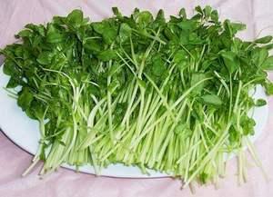 新鲜碗豆苗 碗豆嫩头蔬带箱500克