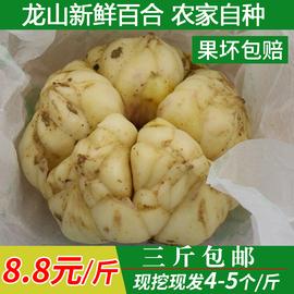 龙山新鲜百合500g特级1斤装纯农家百合食用天然非兰州产百合干货图片