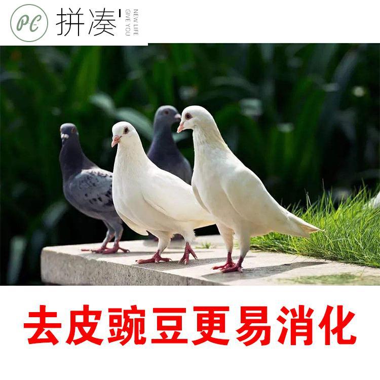 斤鸽食鸽梁鸽粮5料饲料鸽子元宝信鸽补钙营养食物豌豆-鸽饲料(拼凑旗舰店仅售18.63元)
