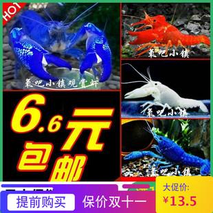 观赏鳌虾活体宠物天空蓝魔虾淡水冷水蓝色小龙虾苗龙纹虾侏儒大型