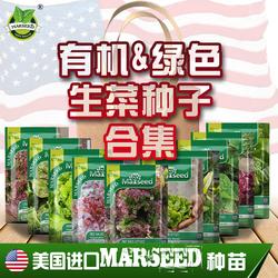 【生菜合集】进口嫩奶油速生大紫球四季蔬菜生菜种子籽孑阳台种菜