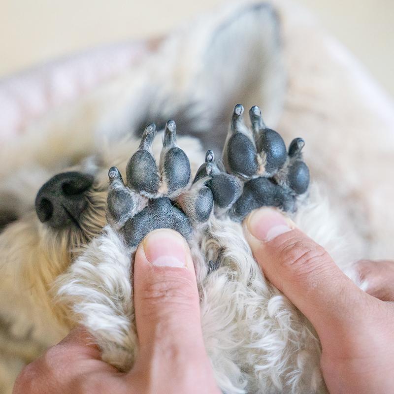 它护护爪霜狗脚掌护理宠物护足膏脚底滋润爪子护脚霜猫咪肉垫护理