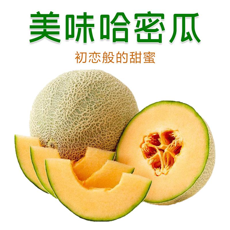 【买1送1】甘肃哈密瓜带箱10斤包邮新鲜当季水果脆甜网纹瓜香瓜