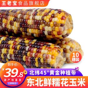 领10元券购买王老宝东北10根新鲜甜非转基因苞米