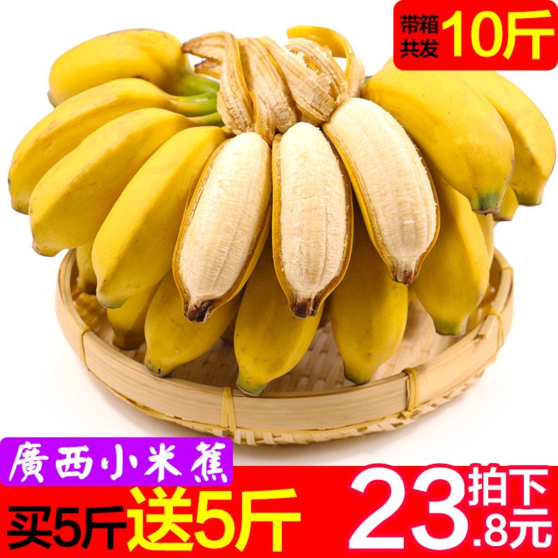 广西小米蕉新鲜水果当季带箱10斤小香蕉芭蕉皇帝蕉banana