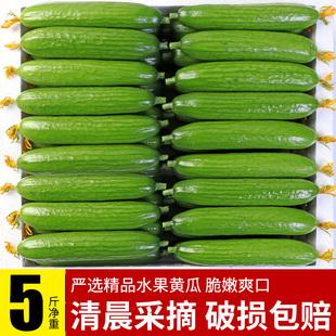 黄瓜新鲜小黄瓜水果小青瓜荷兰蔬菜农家10山东旱生吃5斤现摘现发