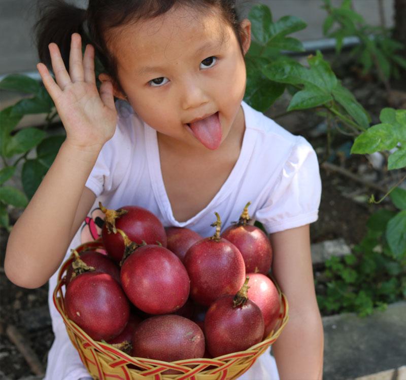 (用5元券)广西当季精选新鲜百香果大果5斤带箱包邮水果西番莲鸡蛋果酸香甜