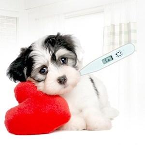 领20元券购买狗狗宠物咪温度计兽用电子体温专用用狗用无汞