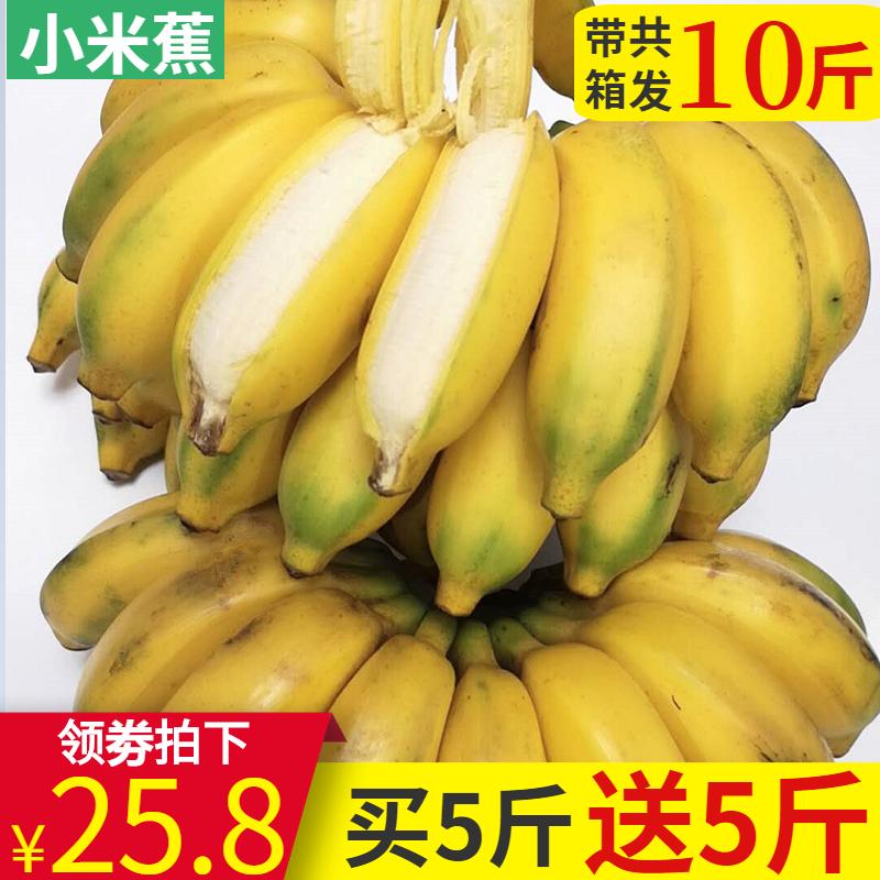 广西酸甜小米蕉带箱10斤包邮当季香蕉新鲜水果banana非芭蕉皇帝蕉
