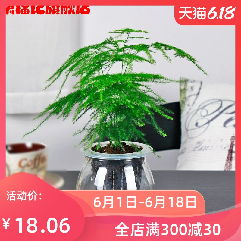 All year round decorations home table top garden home green plant indoor potted plant family fresh home