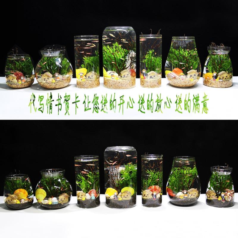 换鱼瓶小造水景鱼缸景观瓶鱼diy免生态桌面办公鱼虾微斗鱼,可领取1元天猫优惠券