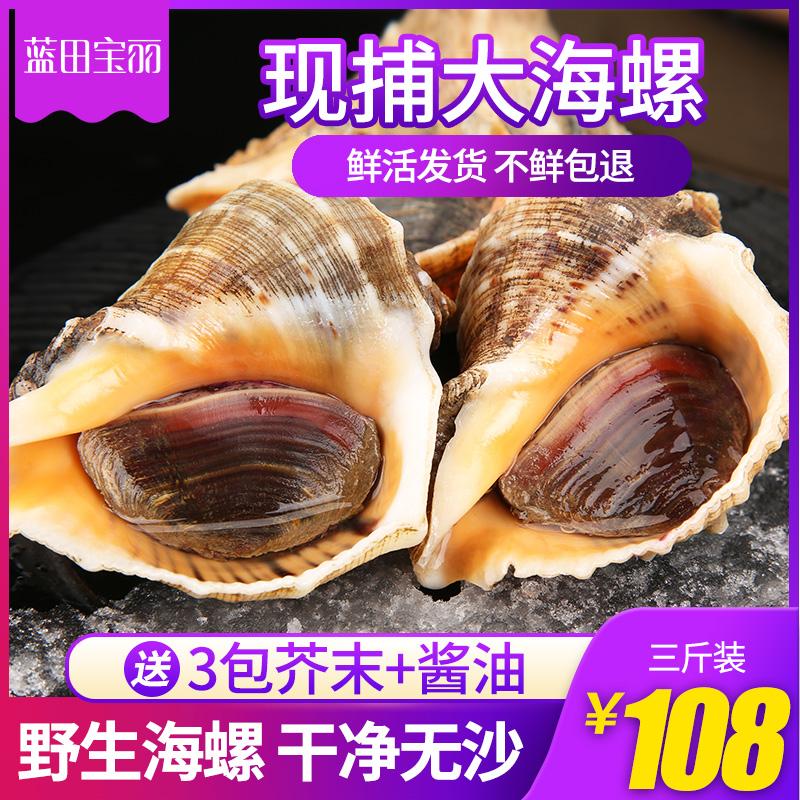 海螺鲜活中海螺海鲜贝类鲜活野生大海螺3斤海鲜海产品1500克包邮