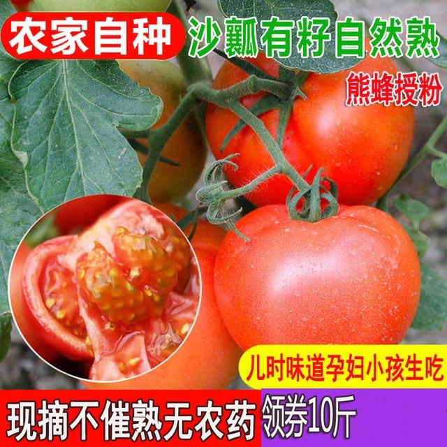 带箱10斤西红柿 新鲜沙瓤番茄自然熟 农家现摘孕妇儿童水果蔬菜