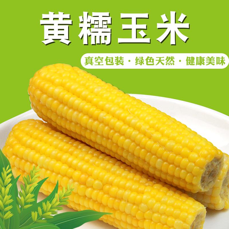 东北即食新鲜甜糯玉米棒非转基因粘黏 粘糯玉米4穗真空早餐玉米棒