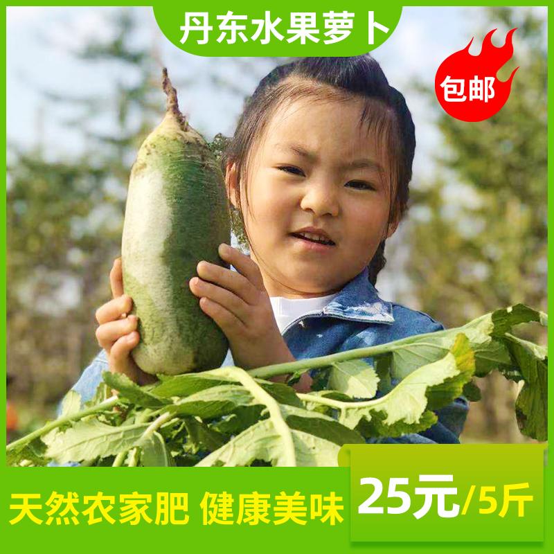 新鲜水果萝卜正宗甜脆非沙窝萝卜丹东青萝卜生吃新鲜蔬菜现拔包邮