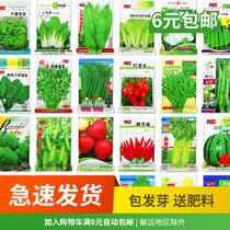 蔬菜種子春季孑套餐春秋種菜種南方農家四季陽臺種菜菜籽種大全