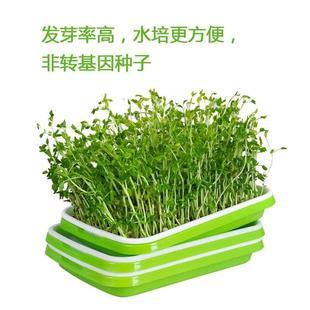 9盆蔬菜豆芽盘家用发芽塑料育苗纸上自制容量大神器豌豆水培托盘