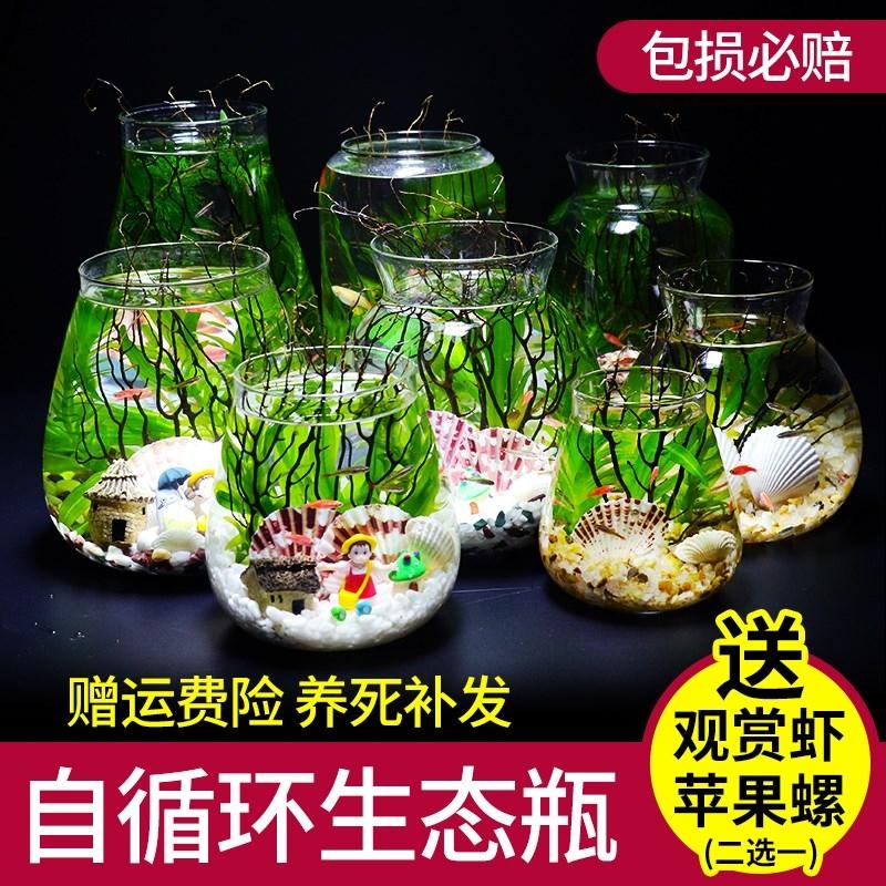 生态瓶鱼微景观免换水小鱼斗鱼活体生态鱼瓶桌面小型鱼缸虾螺水族,可领取1元天猫优惠券