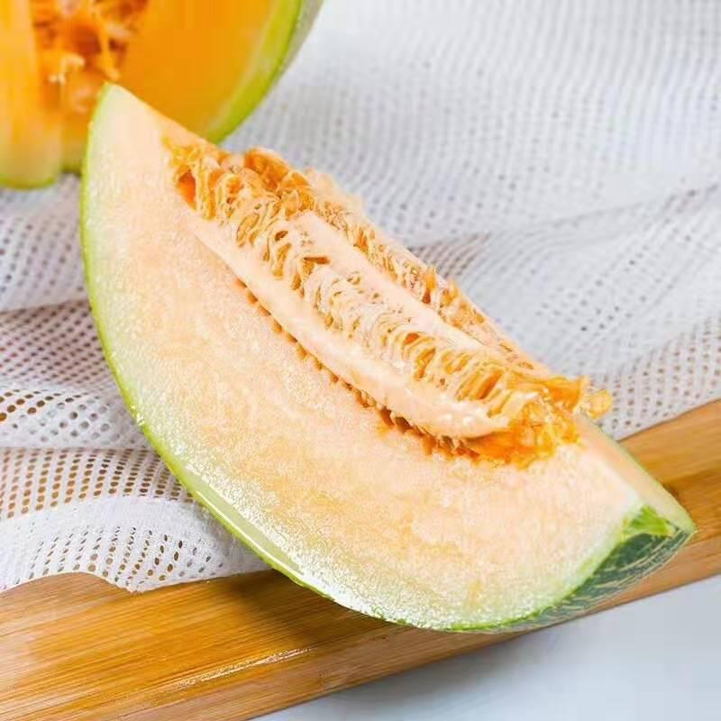 内蒙古西洲蜜瓜哈密瓜甜瓜新鲜采摘水果包邮PK新疆民勤西州蜜。