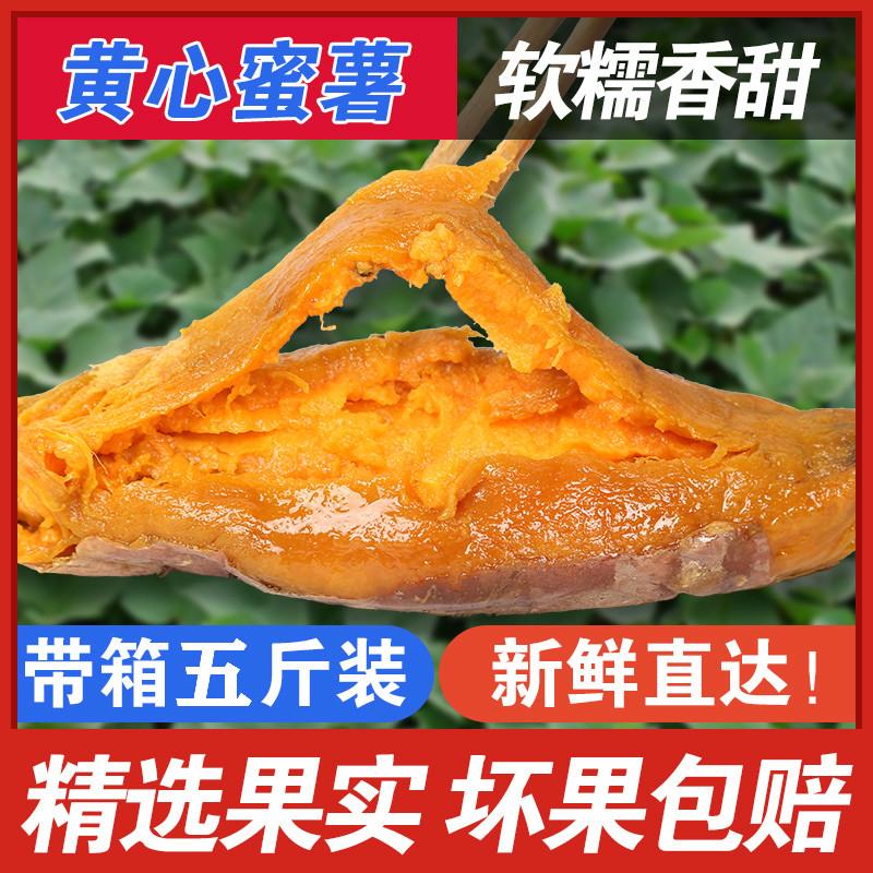 新鲜红薯沙地六鳌蜜薯带箱5斤装地瓜糖心蜜薯农家烤山芋板栗番薯