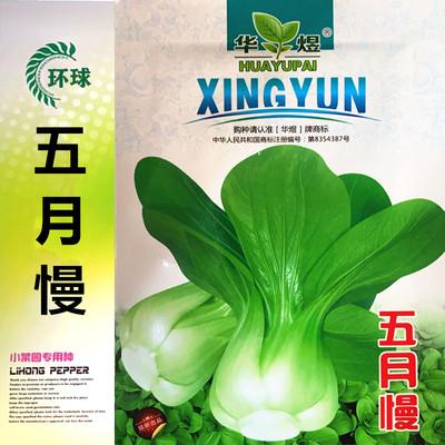 四季杂交蔬菜种子四月慢籽青梗菜五月慢苏州青耐热高产矮脚小青菜