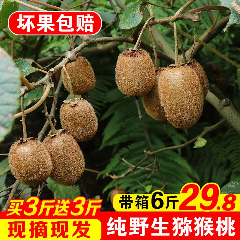贵州修文猕猴桃当季新鲜孕妇水果绿心奇异果纯野生小果现货包邮