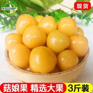 现货东北新鲜包邮3斤灯笼果菇娘