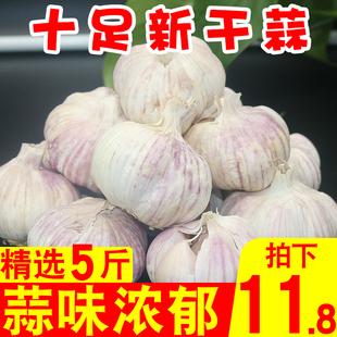 包邮 大蒜干蒜新鲜多瓣蒜河南大蒜子优质大蒜头茬新蒜干蒜5斤