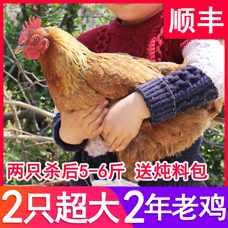 发2只2年超大土鸡山林老母鸡农村草鸡农家笨鸡走地鸡现杀新鲜整鸡