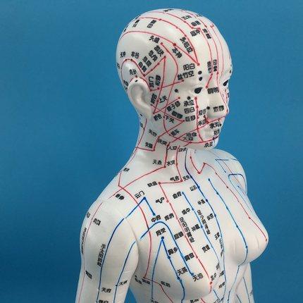 超清晰人体针灸穴位模型中医经络通针灸模型人体铜人大号男女模