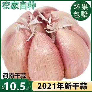 大蒜头2021新干大蒜头5斤紫红皮大蒜种籽干蒜10斤2斤河南干大蒜