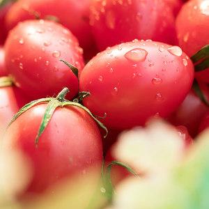 新鲜圣女果千禧小番茄水果西红柿5斤现摘玲珑小柿子孕妇水果蔬菜