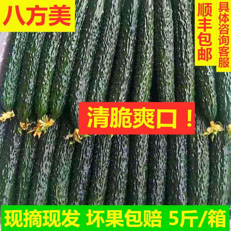 八方美现摘现发带刺长寿光新鲜蔬菜