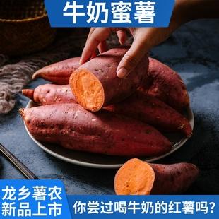 牛奶蜜薯新鲜板栗农家自种现挖5斤