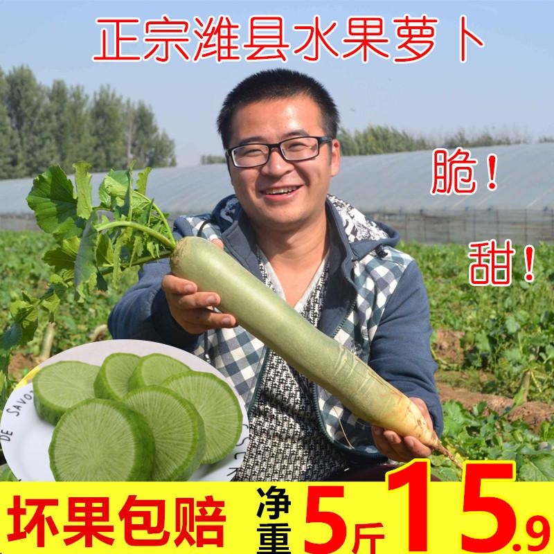 正宗潍县萝卜潍坊水果萝卜潍坊青萝卜山东特产蔬菜水果非天津萝卜