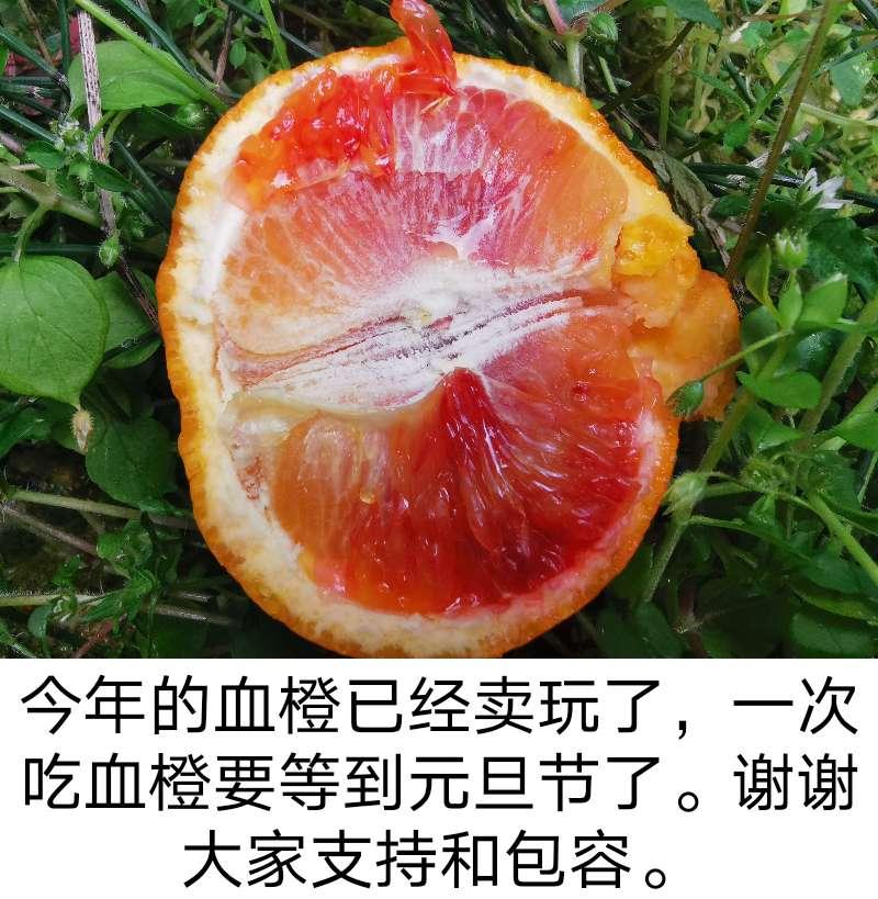 红肉苹果正宗四川资中塔罗科雪血橙玫瑰香新鲜水果现摘红肉心桔子