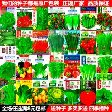 菜种籽大全香菜葱阳台农家蔬菜种子四季播种白菜草莓菠菜番茄种孑