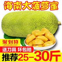 海南菠萝蜜黄肉大树木波罗蜜红20/25/30斤三亚新鲜应当季热带水果