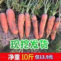 胡萝卜10斤新鲜蔬菜水果脆甜红心萝卜批一箱现挖发货包邮整箱