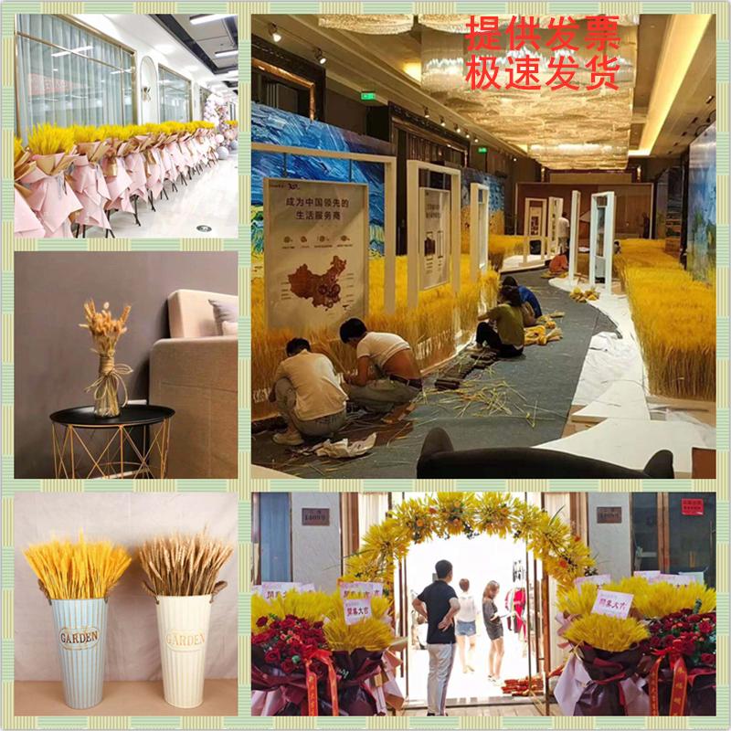 天然麦穗干花花束开业大麦干花田园装饰摆件拍摄道具干花真花包邮