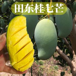 广西百色田东桂七芒芒果应季现摘热带水果新鲜当季整箱10斤包邮