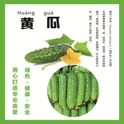 东北特产新鲜旱青瓜生吃水果小黄瓜蘸酱孕妇蔬菜 5斤包邮0-8℃