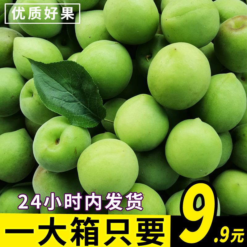【5斤】诏安青梅果新鲜果现摘酸水果子泡酒专用酸梅酵素散装大果