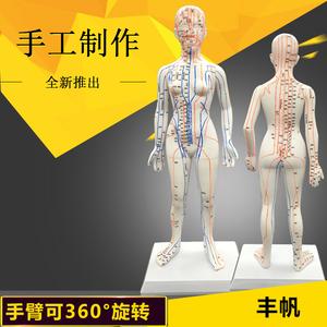 清晰刻字50cm人体穴位模型中医针灸教学男女铜人48全身经络按摩图