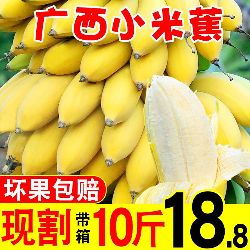 廣西小米蕉新鮮10斤當季水果新鮮現摘發時令水果香芭蕉整箱包郵大