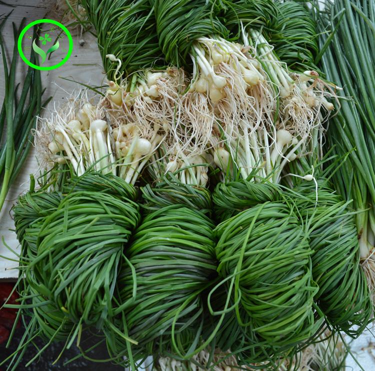 湘西沅陵特产野生野葱酸菜新鲜小根野蒜茭头胡葱酸外婆菜开胃下饭