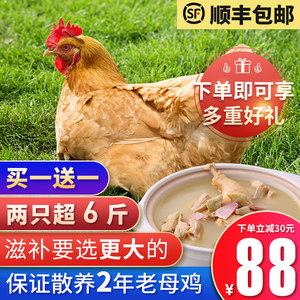 农家散养新鲜现杀2只超6斤老母鸡