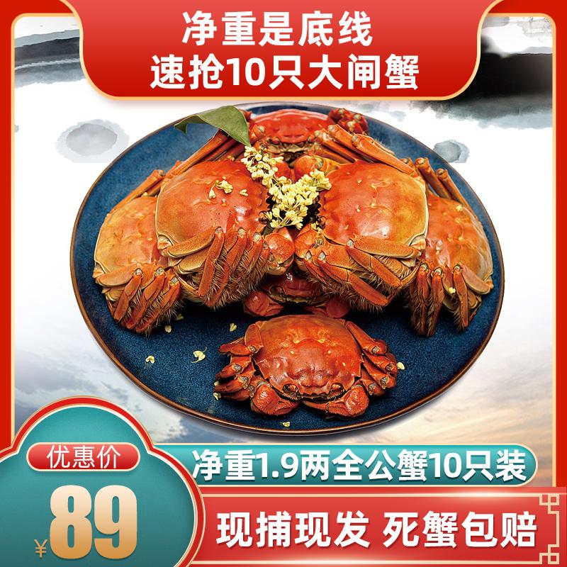 1.9两鲜活螃蟹10只全公蟹洪泽湖海鲜水产现货大闸蟹礼盒团购公蟹