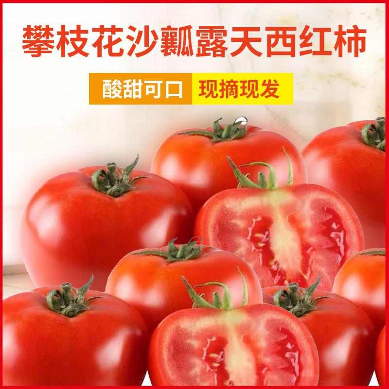 攀枝花沙瓤露天西红柿新鲜普罗旺斯番茄5斤当季蔬菜包邮小番茄